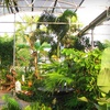 Half Off Plants and Gardening Supplies