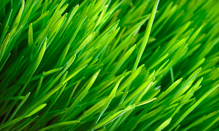 Horticulturally Sound, Inc. (HSI) - Multiple Locations: $49 for Soil-Sample Analysis and Two Chemical Lawn Treatments from Horticulturally Sound, Inc. (HSI) (Up to $140 Value)