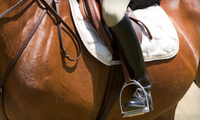 Center Line Sport Horses - Cedar Hill: Two, Four, or Six English or Dressage Riding Lessons at Center Line Sport Horses (Up to 60% Off)
