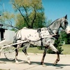 Up to 56% Off Carriage Ride