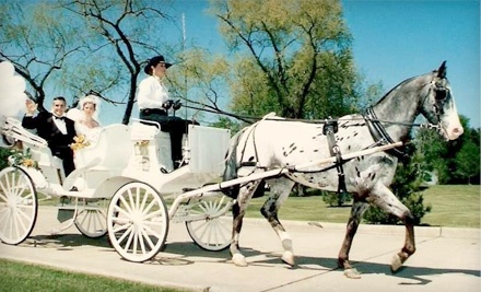 Party Animals Carriage Service - Party Animals Carriage Service in Dallas