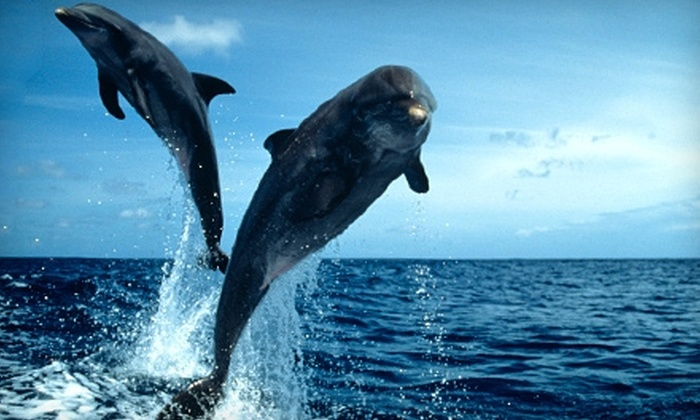 Adventure Cruises - Hilton Head Island: $7 for Admission to Captain Mark's Dolphin Watch Nature Cruise from Adventure Cruises (Up to $14 Value)