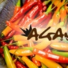 52% Off at Agave Latin Bistro and Tequila Bar
