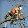 $99 for $300 Toward Tree Services