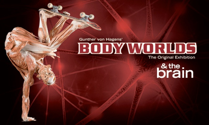 "Body Worlds & The Brain at the St. Louis Science Center - St Louis: $11 for One Admission to ""Body Worlds & The Brain"" Exhibit at St. Louis Science Center"