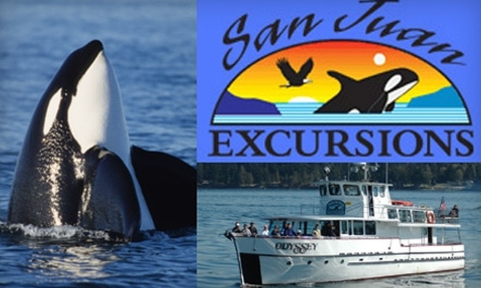 San Juan Excursions - Friday Harbor: $40 for a Whale-Watching and Wildlife Cruise from San Juan Excursions (Up to $82 Value)