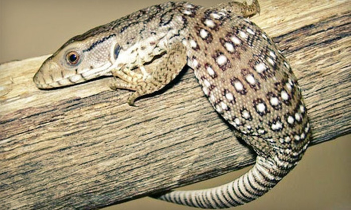 Cold Blooded Encounters - Monroe: Reptile-Zoo Visit for One or Four or After-Hours Tour for Up to Five at Cold Blooded Encounters in Monroe (Up to 51% Off)
