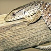 Cold Blooded Encounters – Up to 51% Off Visit
