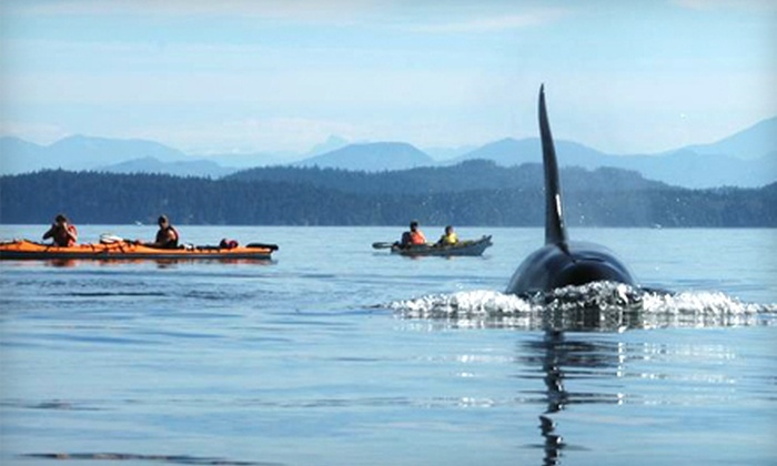 Outer Island Expeditions - Orcas: Kayak Tour of Point Doughty or Sucia Island from Outer Island Expeditions in Eastsound (Up to 51% Off)