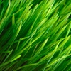 Up to 51% Off Core-Aeration Lawn Treatment