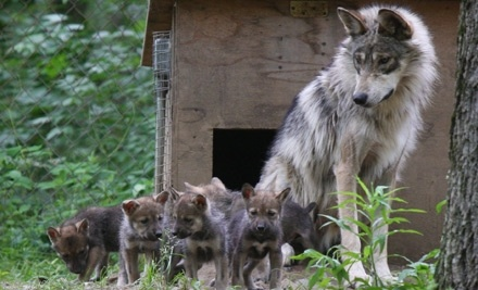 Endangered Wolf Center: Two Daytime Tour Admissions With or Without an Accompanying Program - Endangered Wolf Center in Eurka
