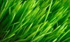 Clean Air Lawn Care: Sustainable Lawn Care from Clean Air Lawn Care. Five Options Available.