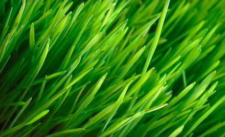 Clean Air Lawn Care: 1 Session of Sustainable Lawn Care and Service for up to 5,000 Sq. Ft. - Clean Air Lawn Care in