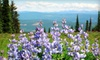 Half Off Mountain Wildflower Tour for Two