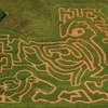 The Corn Maze in The Plains - Scott: $5 Admission to the Corn Maze or Moonlight Maze at The Corn Maze in The Plains (Up to $9 Value). Choose from Two Options.