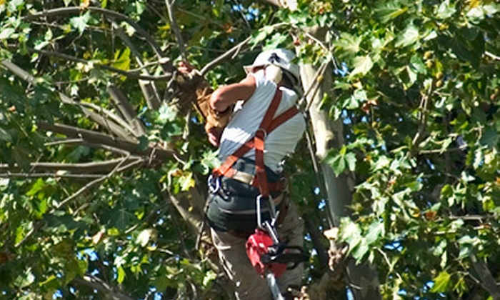 Life Tree Removal & Service - Buffalo: One or Two Hours of Tree-Care Services from Life Tree Removal & Service (Up to 52% Off)