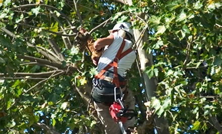 1 Hour of Tree-Care Services (a $150 value) - Life Tree Removal & Service in