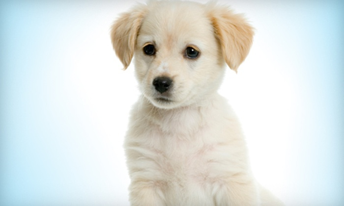 Central Bark - Glendale: 5- or 10-Day Doggy-Daycare Package or $20 for $45 Worth of Dog Grooming at Central Bark