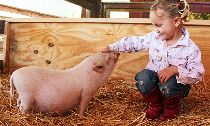 Petting Zoo Package Zoomars Groupon