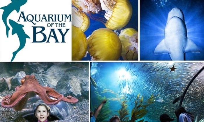 Aquarium of the Bay - San Francisco: $8 Admission to Aquarium of the Bay ($15.95 Value)