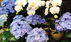 Laguna Nursery: $30 for $50 Worth of Plants and Garden Accessories at Laguna Nursery