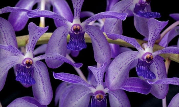 Pacific Orchid Exposition - Marina: $14 for Two General Tickets to the Pacific Orchid Exposition at the Fort Mason Center on Sunday, March 6