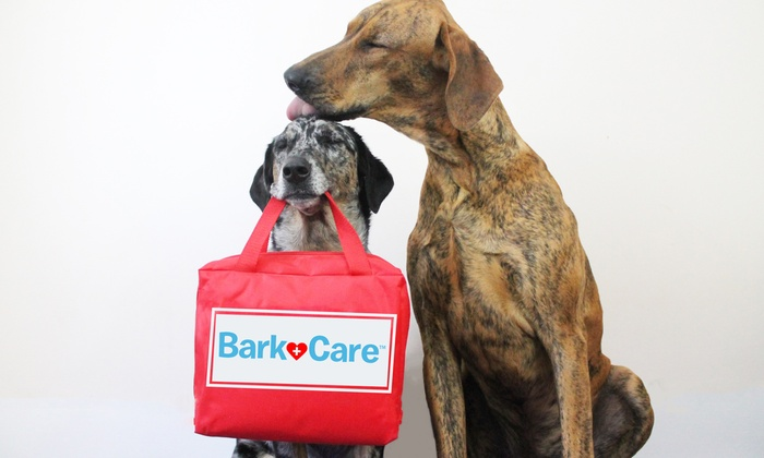 BarkCare - New York: Veterinary Wellness Visit with Option for Vaccines and More from BarkCare, the Makers of BarkBox (Up to 51% Off)
