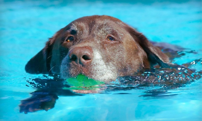 Waterpaws - Eastview: $12 for a 20-Minute Hydrotherapy Session for One Dog at Waterpaws ($25 Value)