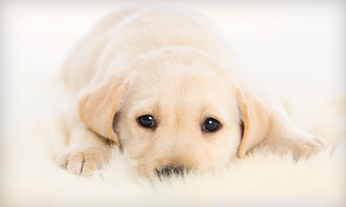 Arizona Pet Vet - Multiple Locations: $24 for a Comprehensive Pet Exam at Arizona Pet Vet ($49 Value)