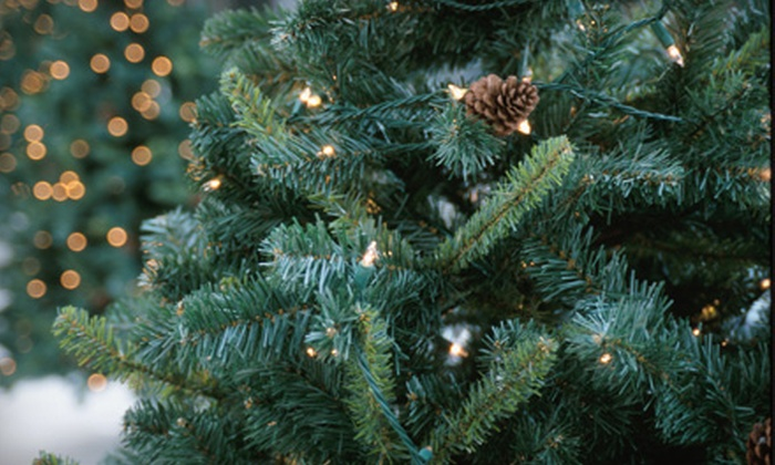 The Plant Stop - Land O' Lakes: $40 for a 6'-8' Fraser Fir Christmas Tree at The Plant Stop ($85.58 Value)
