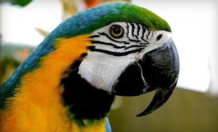 Bird Kingdom: One Child Admission - Bird Kingdom in Niagara Falls