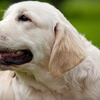 Up to 62% Off Canine Care in Middlesex