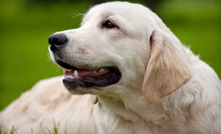 Camp Bow Wow: Dog Days Spa Package Including a Bath and Brushing - Camp Bow Wow in Middlesex
