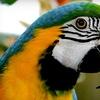 Up to 58% Off Aviary Visit at Bird Kingdom