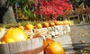 Up to 60% Off at Reeves-Reed Arboretum in Summit