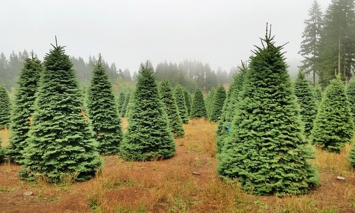 Christmas Tree House - Multiple Locations: $59 for a 5'–8' Noble Fir Christmas Tree at Christmas Tree House ($100Value)