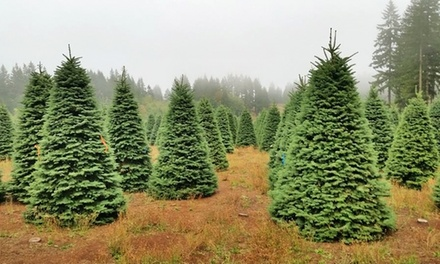 $59 for a 5'–8' Noble Fir Christmas Tree at Christmas Tree House ($100Value)