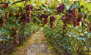 The Gracious Grape: Up to 50% Off Wine Tours at The Gracious Grape