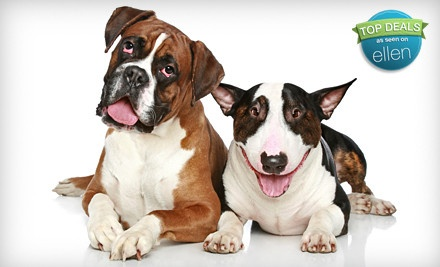 Family Portrait Session with a Pet (a $120 value) - Highland Camera / Studio 370 in Kitchener