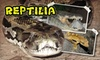 Up to 53% Off Admission to Reptilia