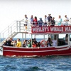 Up to 58% Off Whale Watching in Pleasant Bay