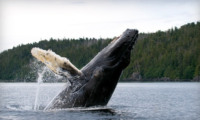 Great Pacific Adventures - Downtown: $55 for a Three-Hour Ocean Cruiser Whale-Watching Tour from Great Pacific Adventures ($110.88 Value)