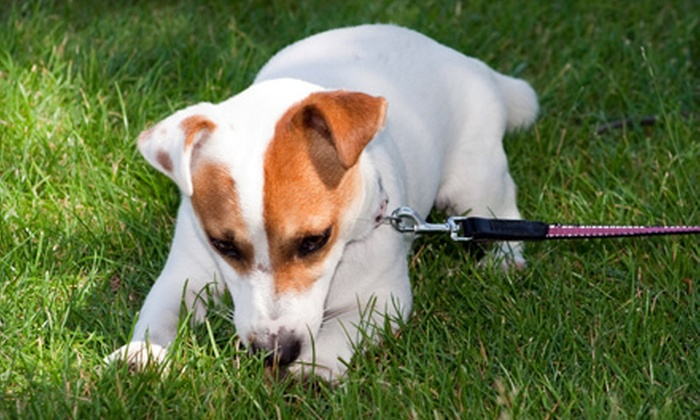 Doo Duty - Multiple Locations: One-Time Dog-Waste Removal or One Month of Dog-Waste Removal from Doo Duty