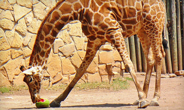 Abilene Zoo - Lytle Area: $50 for a One-Year Membership at Abilene Zoo ($100 Value)