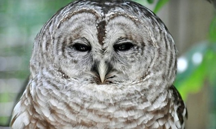 Kellogg Bird Sanctuary - Augusta: $18 for a One-Year Household Membership to the Kellogg Bird Sanctuary ($35 Value)