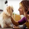 Half Off Self-Serve Dog Washes