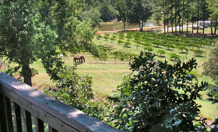 Winery Tour for 2 Plus 1 Take-Home Bottle of Wine (a $25 value) - Treehouse Vineyards in Monroe