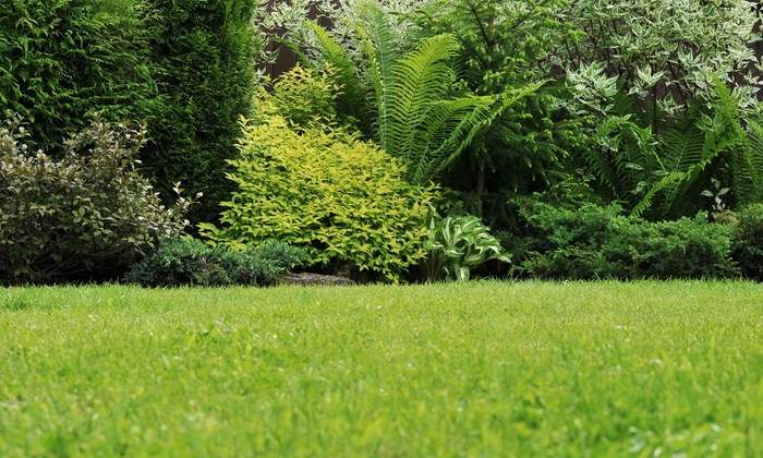 Weed Man - Fairfield: $25 for a Full Weed Control Treatment from Weed Man (Up to $107 Value)