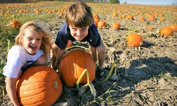 Brooks Farms - Mount Albert: Summer Fun Festival Outing for Two or One Season Pass to Summer Fun and Fall Festival at Brooks Farms in Mount Albert