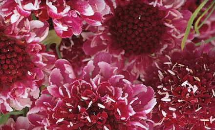$20 Groupon to Garden Thyme Nursery - Garden Thyme Nursery in Silverton